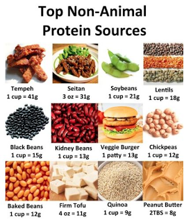 plant+protein